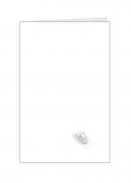 bladtekening2-kleine-kaart