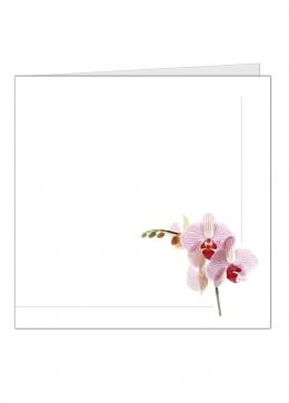 orchideetak-vierkant