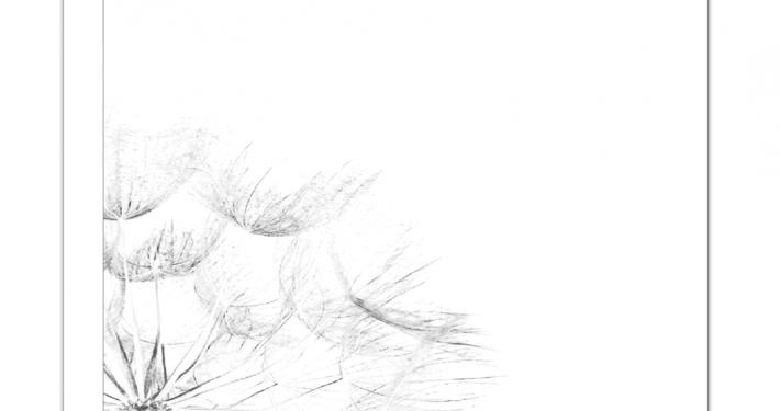 paardenbloem-vierkant