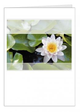 lotus-a5